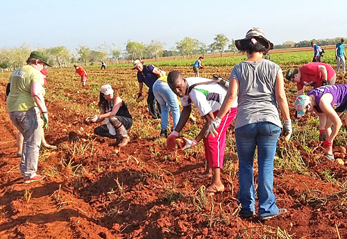 May Day Brigade does volunteer work on Cuba's farms