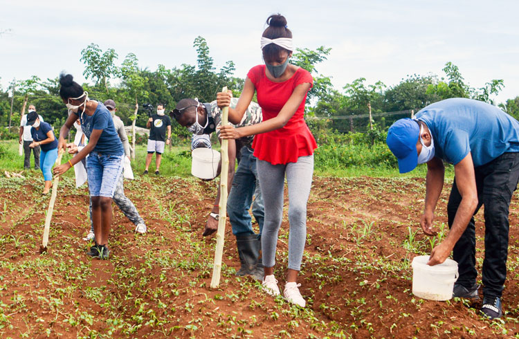 Young people in Havana planting cucumbers at La Batalla farm May 23. Union of Young Communists is leading workers, farmers and youth to expand agricultural production to cut into food shortages caused by deepening world capitalist crisis, punishing U.S. trade sanctions.