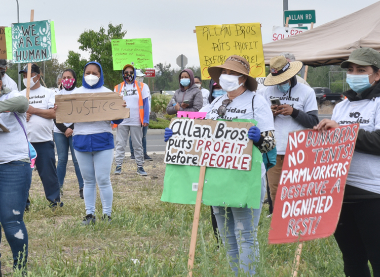 Striking workers picket at Allan Brothers fruit processing plant in Naches, Washington, May 19. Workers are demanding higher wages, job safety, clean water and 40-hour workweek.