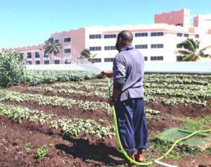 Ante la caída del turismo y recrudecimiento del embargo EUA, los trabajadores siembran terrenos en Hotel Meliá en Varadero, Cuba, para crear empleos y alzar producción de alimentos.